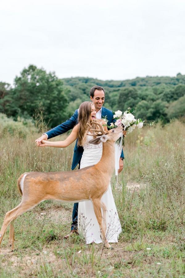 Chú nai vàng ngơ ngác xuất hiện giữa buổi chụp ảnh cưới
