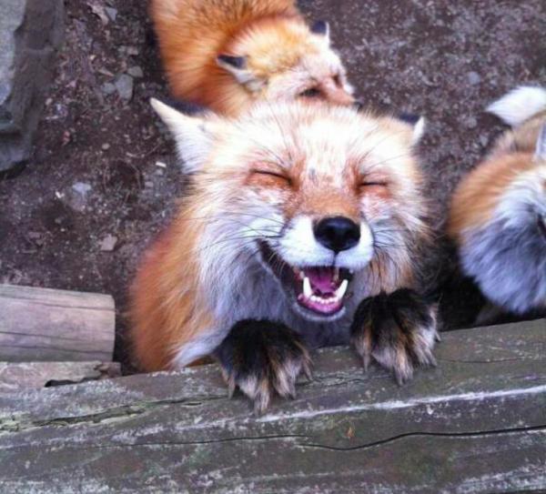 Loạt biểu cảm không thua gì diễn viên hạng A của các loài động vật