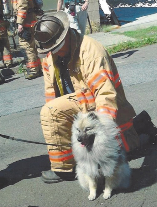 Những câu chuyện cảm động rơi nước mắt về bầy chó cứu hộ ngày 11/9