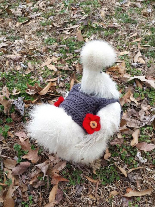 Thời trang thu đông đậm chất sang chảnh chỉ dành cho... gà 'thượng lưu'