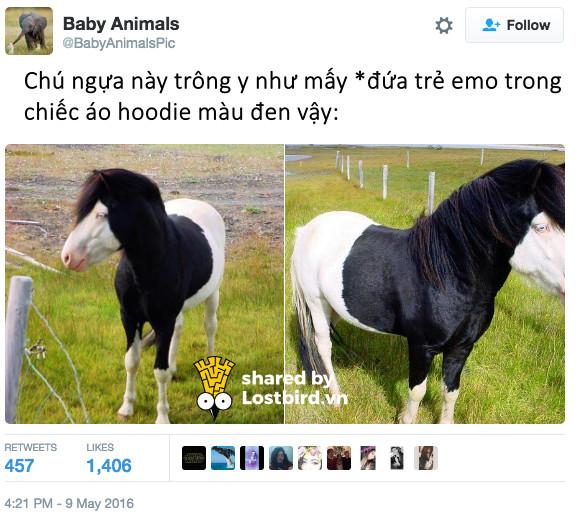 Bằng chứng cho thấy ngựa là một loài động vật hài hước