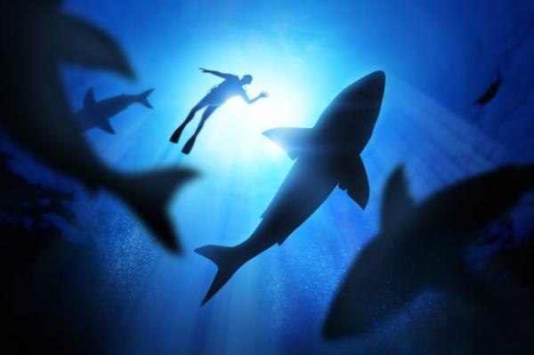 Bị bỏ tù sau khi quay video cảnh cá mập bị tra tấn đến chết