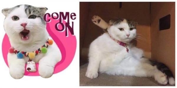 Nguồn gốc của bộ sticker mèo dễ thương từng khiến các Facebookers 'điên đảo'