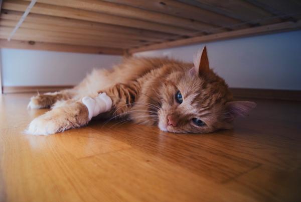 Thành phố Melbourne ra luật khuyến khích nhân viên nghỉ phép để về nhà chăm sóc thú cưng bị bệnh