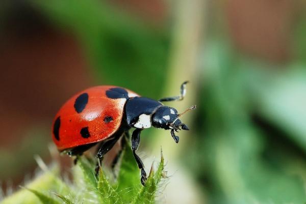 'Đút túi' ngay 9 cách này để ngăn chặn bè lũ côn trùng 'đóng quân' trong ngôi nhà bạn
