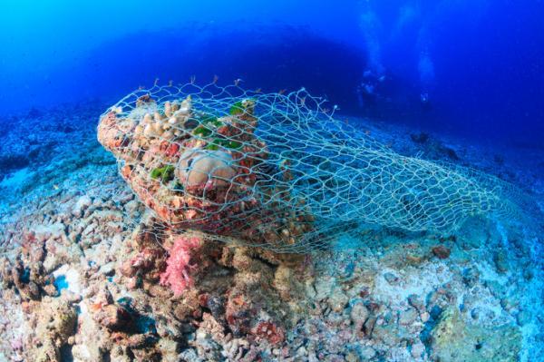 Các nhà khoa học đã làm gì để cứu lấy đại dương đang kêu cứu trong vô vọng?