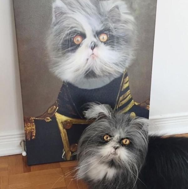 Khoác lên mình những trang phục vương giả, thú cưng cũng 'chanh sả' chẳng kém ai