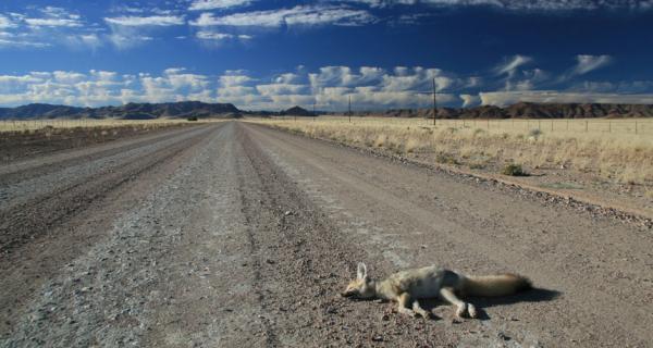 Cặp đôi đăng tin tuyển đầu bếp có thể chế biến động vật chết trên đường thành đồ ăn trong tiệc cưới