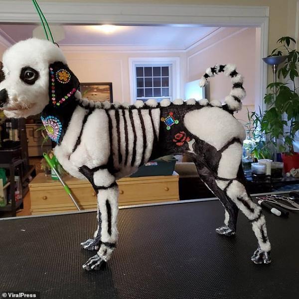 Chủ nuôi gây phẫn nộ vì cắt nhuộm lông chú chó Poodle thành hình thù bộ xương