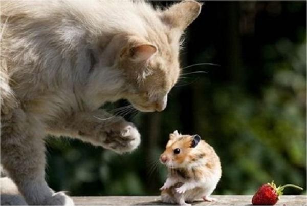 'Bọn tôi sắp ly hôn chỉ vì một con chuột hamster': Cô gái Hàn vén màn cuộc hôn nhân như phim kinh dị