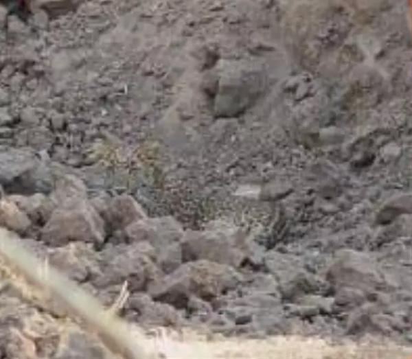 Tấm ảnh khiến ai cũng gãi đầu bứt tóc vì không thể tìm ra con báo đang lẩn trốn