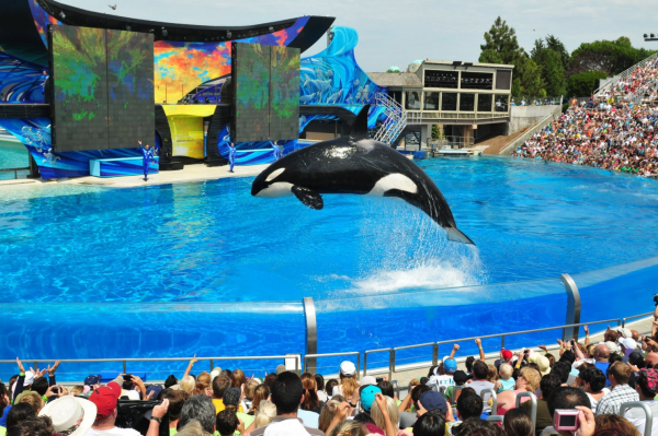 TripAdvisor ngừng bán các loại vé tham quan SeaWorld cùng rất nhiều công viên đại dương khác