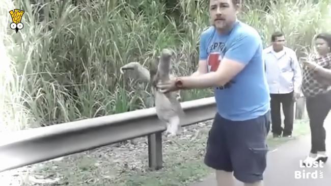 Người đàn ông tốt bụng giúp chú lười qua đường
