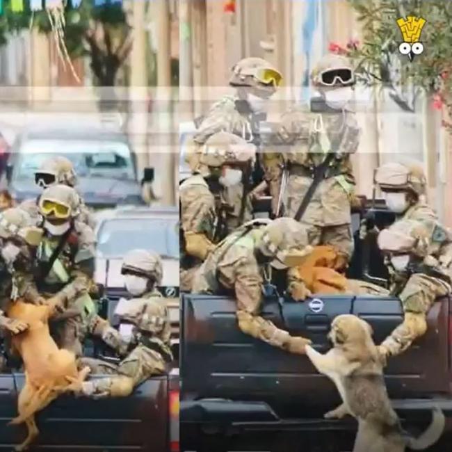 Hai chú chó xin đi cùng các anh lính