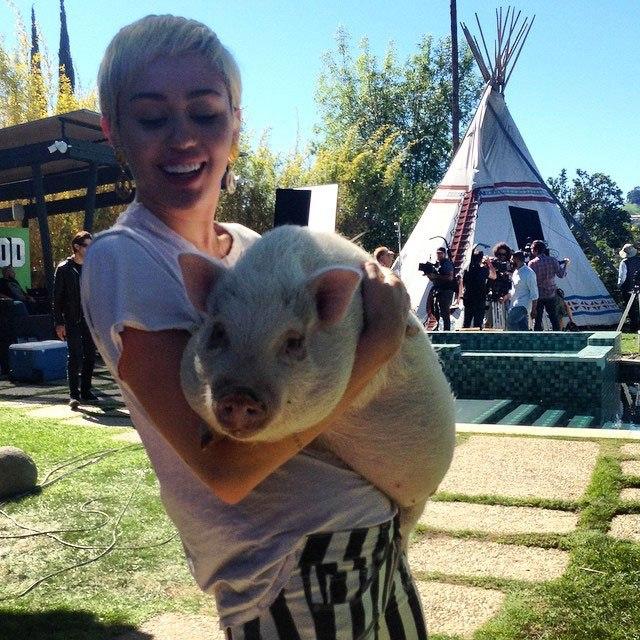 Miley Cyrus đặt tên mới cho Liam sau khi anh cứu được 7 con chó, 4 con ngựa, 2 con lợn và 3 con mèo