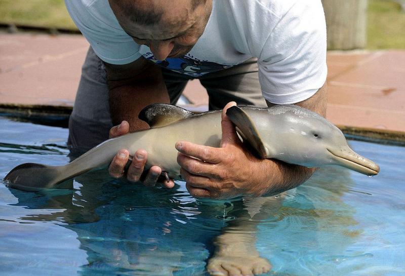 Hãy yêu quý cá heo vì chúng giống với con người hơn bạn nghĩ!