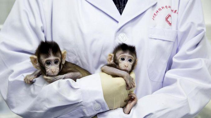 Nhà khoa học Trung Quốc lại tạo ra 5 chú khỉ biến đổi gen gây tranh cãi