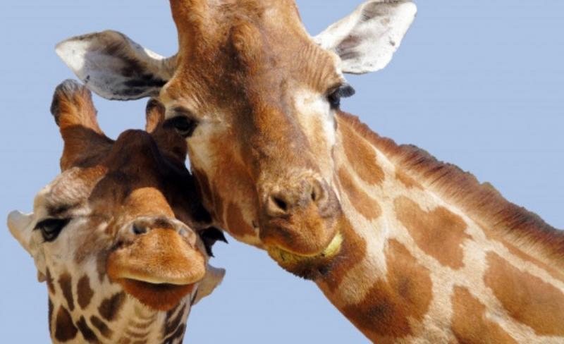 Loạt fact kì thú về động vật mà có thể bạn chưa được học trong giờ Sinh