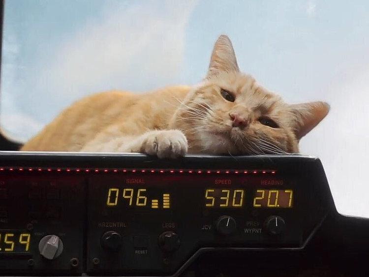 Tất tần tật về Goose - chú mèo chiếm hết spotlight nhân vật chính trong 'Captain Marvel'