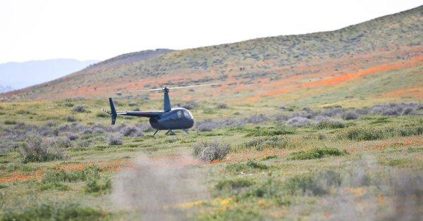 Nhà giàu 'chơi lớn', đáp trực thăng làm tan hoang cánh đồng hoa anh túc tại California