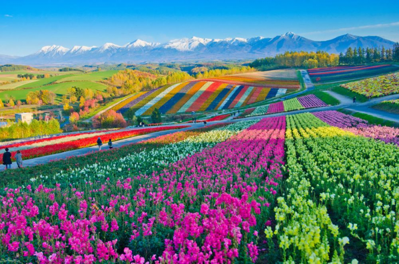 Tan chảy với những 'thiên đường trần gian' rực rỡ sắc màu nhất thế giới