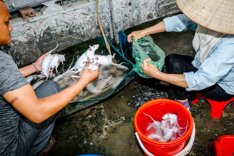 Theo chân nhiếp ảnh gia người Anh tìm hiểu văn hóa ăn thịt chuột lắm sự lạ lùng của Việt Nam