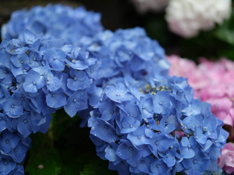 Du lịch mùa mưa tại Nhật Bản, tại sao không?