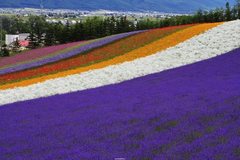 Sau mùa hoa anh đào, đi Nhật Bản để ngắm hoa gì?
