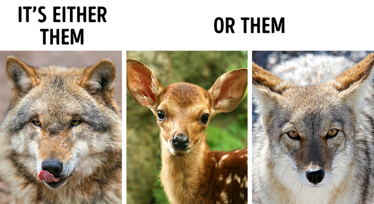Mặt trái của công cuộc bảo tồn động vật quý hiếm