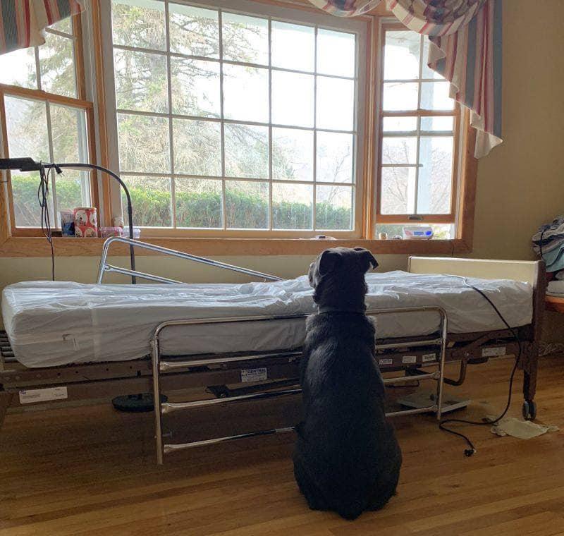 Đau lòng trước cảnh chú chó ngồi chờ người chủ quá cố, hàng trăm người đã ngỏ lời nhận nuôi