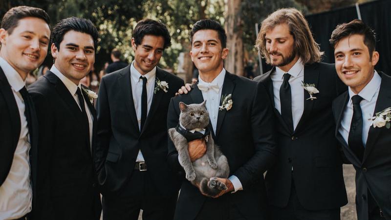 YouTuber chọn mèo cưng làm phù rể trong ngày cưới, yêu cầu nhà hàng phải làm được món cá hồi cho mèo